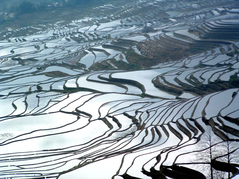 Go Back > Gallery For > Ancient Chinese Rice Fields